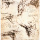 Anatomical Studies - Studies of The Shoulder