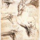 Anatomical Studies - Studies of The Shoulder