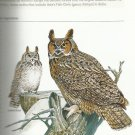 National Geographic Complete BIRDS of North America-Exclusive Edition-Companion