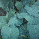 Blue Hostas - Oil Painting