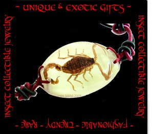 COLLECTIBLE REAL INSECT JEWELRY SCORPION BRACELET ECIC-NB3100