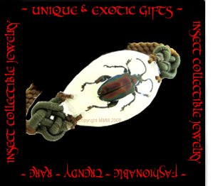COLLECTIBLE REAL INSECT JEWELRY EXTREMELY RARE METALLIC BEETLE BRACELET ECIC-NB3108