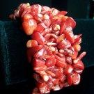 Australian Red Sea Coral