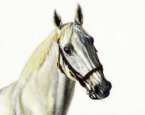 � Original Oil Portrait Painting GRAY STALLION Horse �