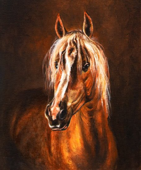 � Original Oil Portrait Painting AVELIGNESE Horse Art �