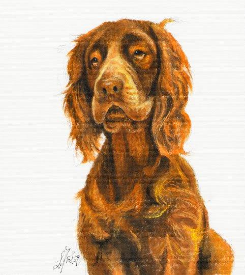 � Original DOG Oil Portrait Painting SUSSEX SPANIEL Art