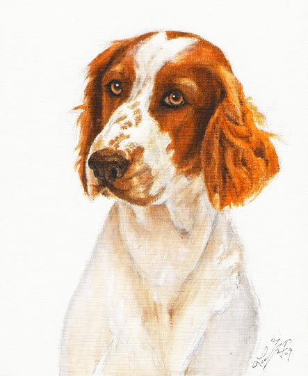 � Original Oil Portrait Painting WELSH SPRINGER SPANIEL