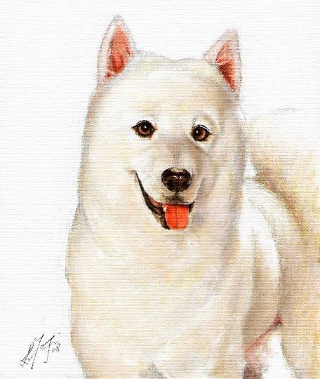 � Original Oil DOG Portrait Painting SAMOYED Artwork �