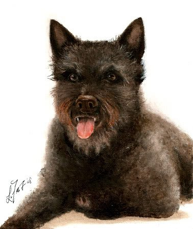 � Original Oil Portrait Painting DUTCH SHEPHERD DOG Art