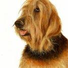★ Original Oil DOG Portrait Painting Artwork OTTERHOUND