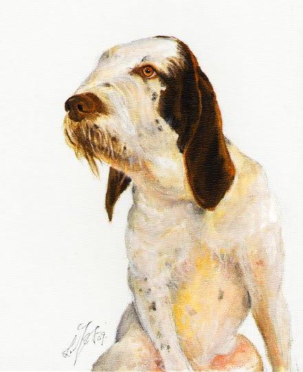 � Original DOG Oil Portrait Painting ITALIAN SPINONE �