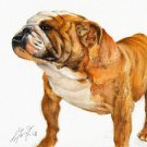 ★ Original Oil DOG Portrait Painting BULLDOG Artwork ★