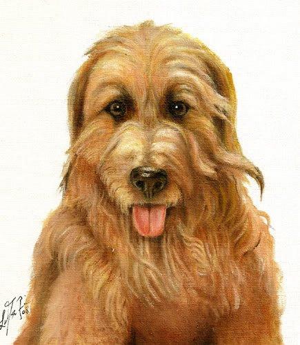 �Original Oil DOG Portrait Painting CATALONIAN SHEEPDOG