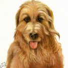 ★Original Oil DOG Portrait Painting CATALONIAN SHEEPDOG