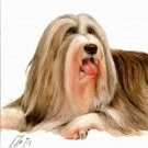 ♥ Original Oil DOG Portrait Painting BEARDED COLLIE Art