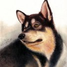 ♥ Original Oil DOG Portrait Painting ALASKAN MALAMUTE ♥