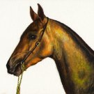 ★Original Oil Portrait Painting Art STALLION HORSE PONY
