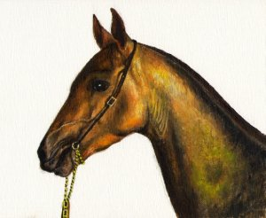 �Original Oil Portrait Painting Art STALLION HORSE PONY