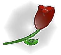 Rose 4X6