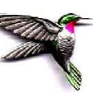 Ruby throated hummingbird pin    free shipping