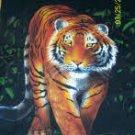 679 Tiger in Black