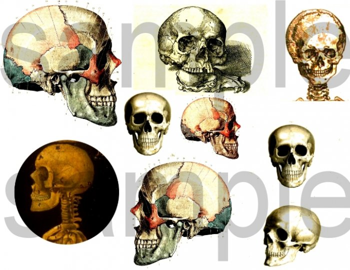 Antique SKULL Images Digital Collage Sheet