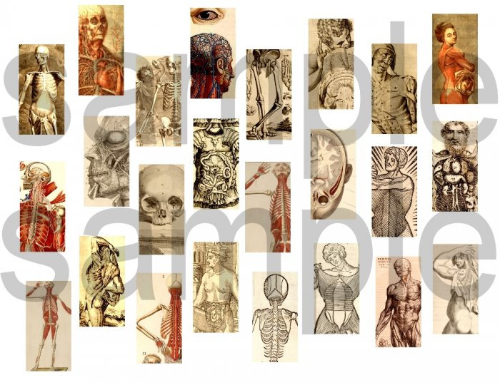 Antique Medical Anatomy Illustrations 1 x 2 inch Charm size Digital Collage Sheet