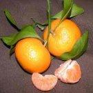 Mandarine Orange / Chinas Mandarinas / Organic