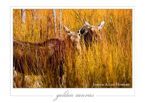 Golden Canvas