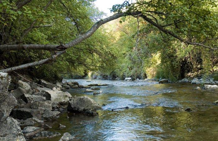 The Logan River