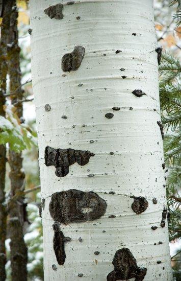 Aspen Patterns
