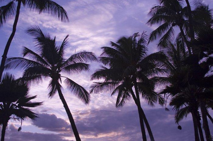 Hawaii Royale