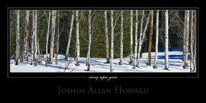 Snowy Aspen Grove by Joshua Allan Howard