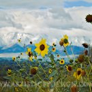 "Wildflowers Overlooking Logan Valley - 20""x 30"" Signed Print"