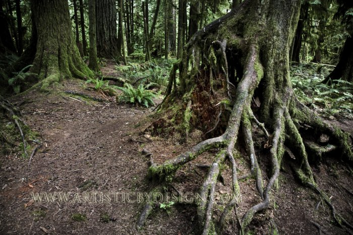"Gnarled Foundations - 20""x 30"" Signed Print"