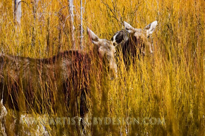 """Golden Canvas - 20""""x 30"""" Signed Print"""