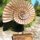 Hand Carved Wooden seashell on display stand 2 ec