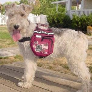Outward Hound Urban Adventure Backpack - Medium