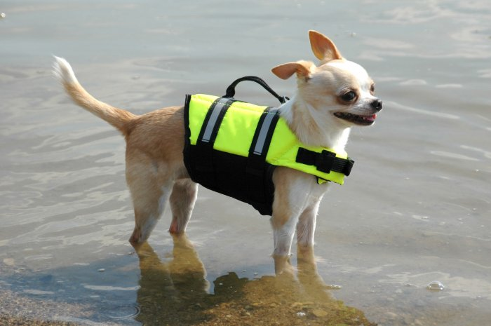 Paws Aboard Neon Yellow Safety Life Jacket Vest Dog Preserver XX-Small