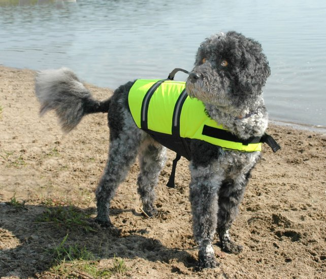 SOLD OUT Paws Aboard Neon Yellow Dog Safety Life Jacket Vest Preserver Large