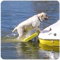 Paws Aboard Doggy Boat Ladder Dog Steps Ramp