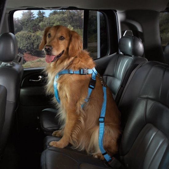 "Cruising Companion Auto Car Safety Dog Harness X-Large 32""-44"" Blue, Black, Pink"