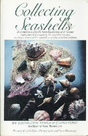 Collecting Seashells  by Johnstone, Kathleen