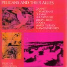 Life Histories of North American Petrels Pelicans  Allies Bent