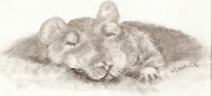 Hooded Rat ACEO Print