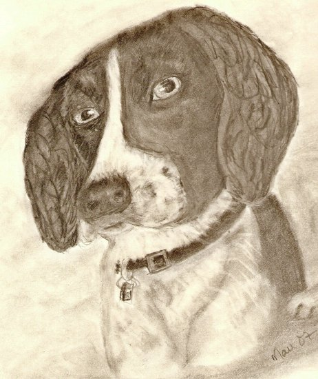Terrier, ACEO print numbered and signed