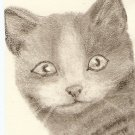Domestic Shorthair, Gray Cat  ACEO print signed  & numbered