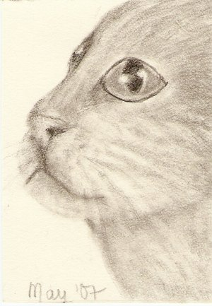 Cat, Domestic Shorthair ACEO print, signed & numbered