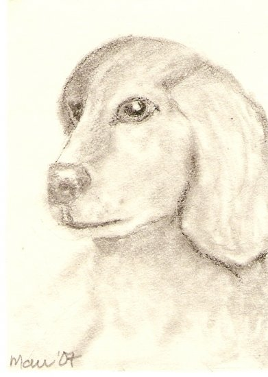 Yellow Labrador Pup ACEO print, sgined and numbered