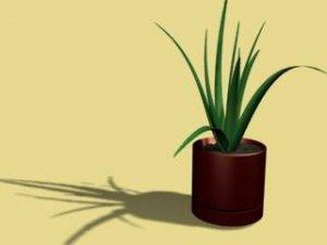 Aloe 3D model